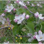 「風と桜という儚さ」