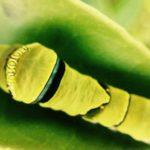 暑かった週日と、雨降りの週末と。それでも、育つ蟲がいた…