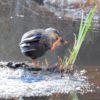 今年は、ニコン P900を携えて、野鳥を撮りに出掛けた元日だったのだ…(その3)