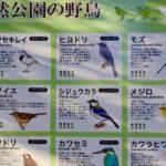 自然公園へ、野鳥の写真を撮影に行ったのだけれども、帰り道で遭遇したのは…