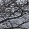気が付いたら、雪が少々積もっていた。何年振りなのだろう、雪景色は…