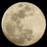 嵐のような雨が過ぎて、日中は快晴。うさぎを外で遊ばせた。夜には、月を撮った…