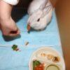 この週末は、うさんぽ日和。うさぎは、にんじんを貰って食べ、外で遊ぶのだ…