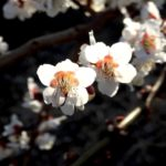 花が咲く。春は近いようで、また寒くもある。うさぎは、外で蹲るのだ…
