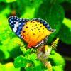 ミントの花に、数々の虫たちが集う。あと、またまた夢の話をば…