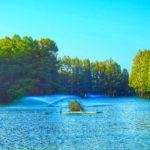 今年のお正月休みのときに行った、あの沼のある公園を再訪したのだ…