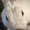 うさぎの顔を真下から写真に撮ってみた。口の形が、何とも可愛いのだ…