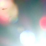 太陽のレンズフレアの中を駆ける自衛隊のヘリコプターを撮った。それと、英語の学習書をふたつご紹介なのだ…