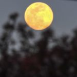 きのうは良い月夜だった。そうそう、今夜は平成最後の満月なのだ…