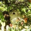 うさぎの写真をまたどうぞ。白うさぎかと思っていたら、背中に何か模様が?…