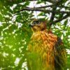 野生の鷹の子たちを観察しようと、ある場所へ立ち寄ったのだ…