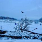 雪景色に彩られた故郷の街を歩く。今まで気づかずにいた風景を見つけるのだ…