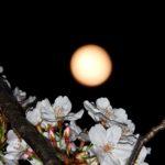 きのうの満月を撮った。黄色っぽい月なのだ。あと天才鬼才指揮者テオドール・クルレンツィスの新作CDについても…