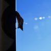 寒い日の朝、ベランダの柵に何かがくっついていたのだ。それをよーく観察してみると…