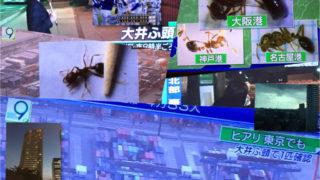 Fire Ant、東京上陸