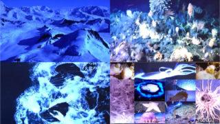 南極の深海にはおそらく行くことはあるまい