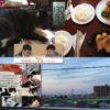 第9回猫の会里親会出席のため、第68回NHK杯で永瀬がまさかの1回戦負けした実況ができなかった