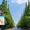 神宮外苑の「高層ビルの森」化はいかに高層ビルマニアでも反対せざるを得ない