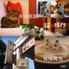 私たちが大好きだった貓‧旅行咖啡輕食館(台中)が閉店してしまう;;
