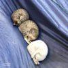 台湾で発見された現存するアンモナイト! 時に敏捷に動き肉を食らい、時に軟体動物のように伸縮する