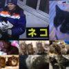 ロシア州政府の高官に抜擢のねこ&カナダごみ処理場で間一髪凍えるような寒さの中で身を寄せ合っていた8匹のこねこ