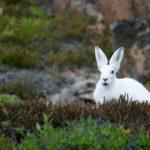 【卒論】〈ウサギ〉狩り